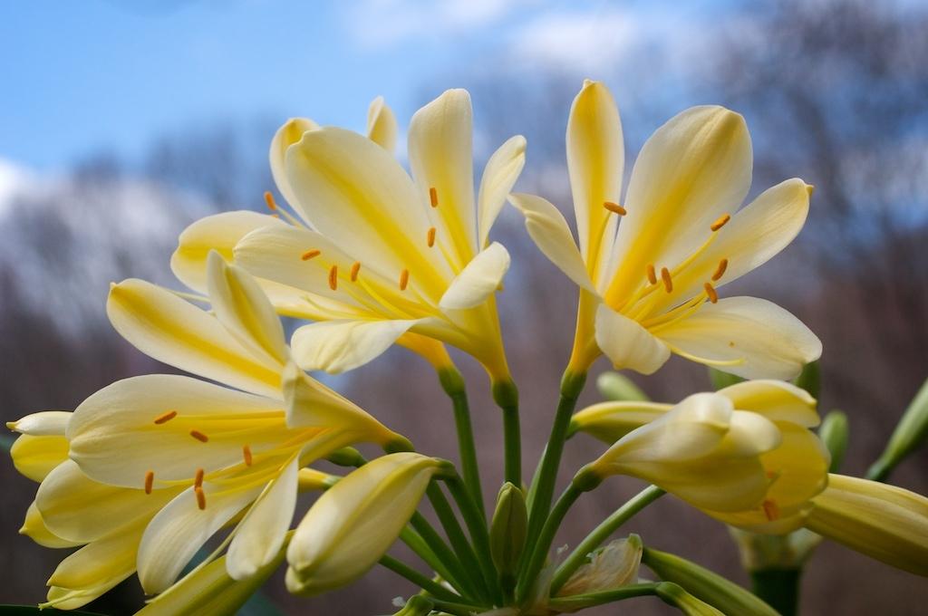 beautiful-easter-flowers
